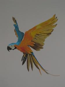 Papagailu uzlidojums bernu istabai